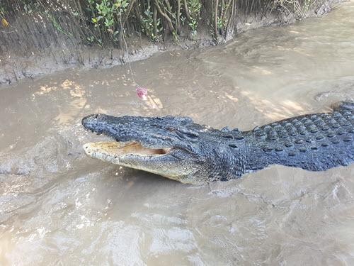 Brutus 5.5 metre 1000kg monster croc