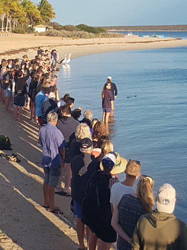 Line up to watch the dolphin getting fed