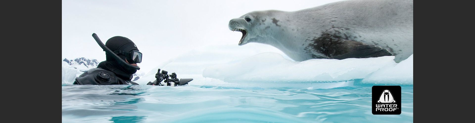 Waterproof_Leopard_Seal